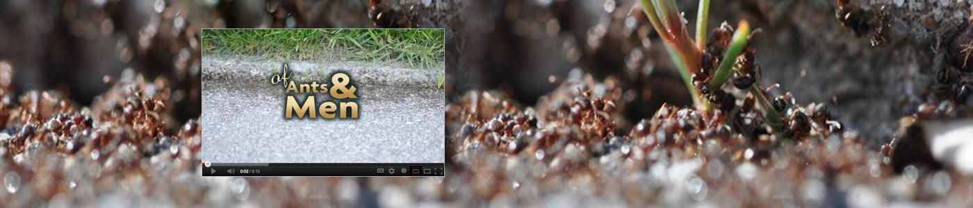 Of Ants & Men